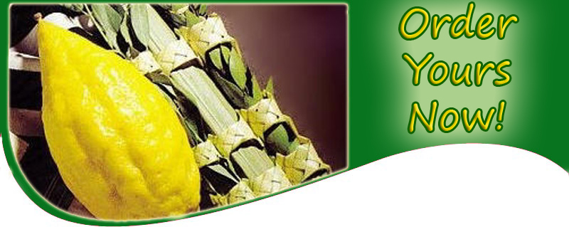 Lulav and Etrog header - Order Now
